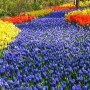 Путь в цветах